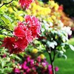 Lightbox Flower Garden
