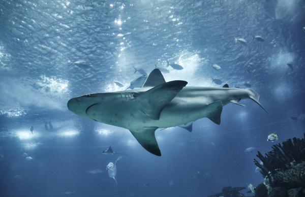 Entdecken Sie Bilder & Videos von Haien hier!