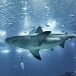Lightbox Sharks